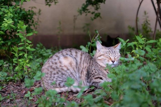 CAT 2015/04/25 X1004109