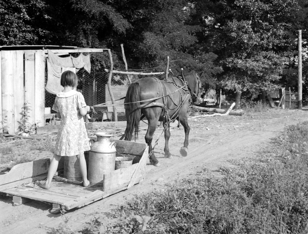 Lois Adolf and horse sledge - All Chris Adolf's children are hard workers on the new place. Yakima Valley, Washington. Farm of Rehabilitation Administration borrower. August 1939
