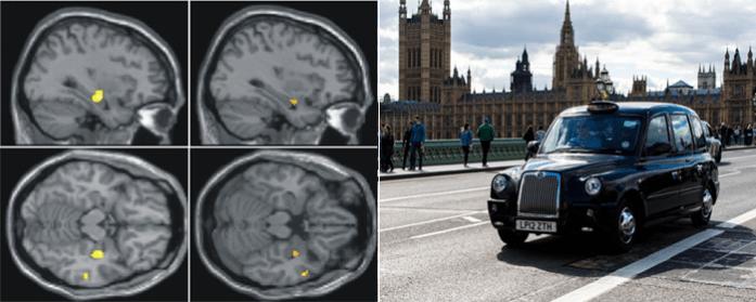Diferencias en el hipocampo en el cerebro de un taxista londinense
