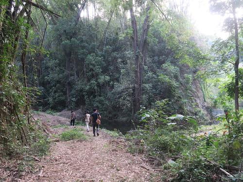 走進那一片樹林(14.2ys)
