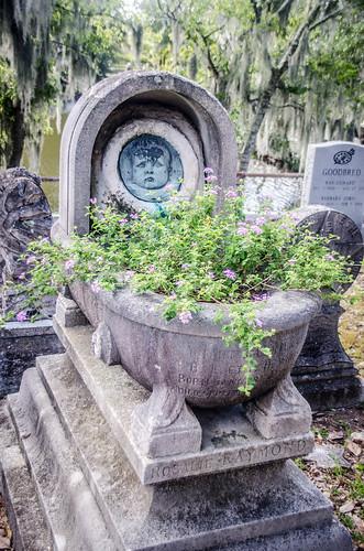 Magnolia Cemetery-013