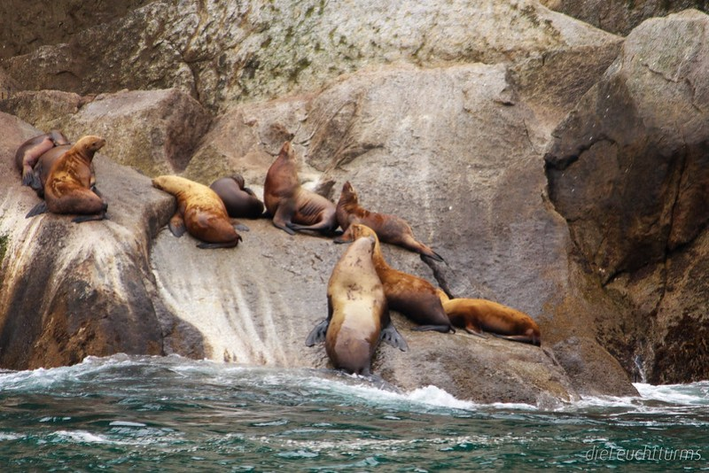 The rock of sea lions