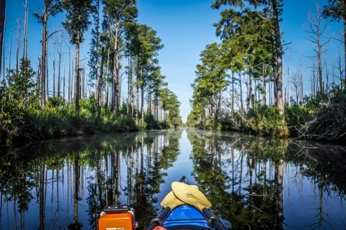 Lowcountry Unfiltered at Okefenokee-040
