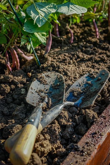 Hand Shovels in a Garden Bed at the White House Kitchen Garden