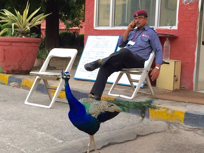 Photo Essay - The Peacock's Monsoon Plot, Mausam Bhawan