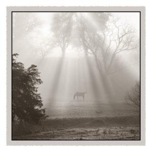 Sunbeams & Shadows - Geometric-MNP-07