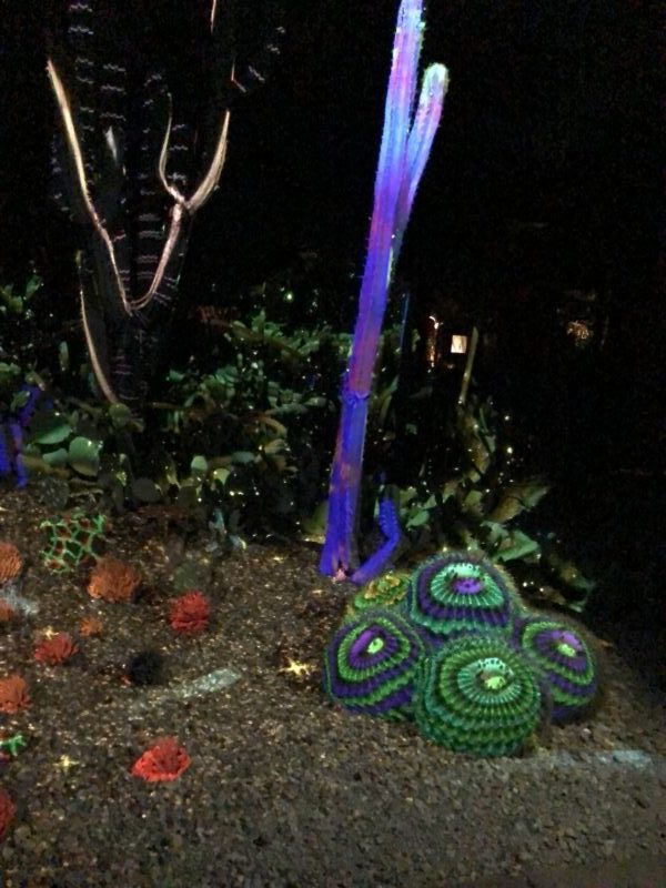 Evening at Phoenix Botanical Gardens