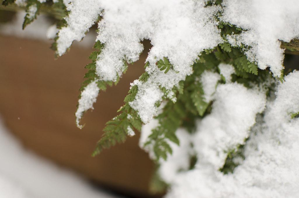 snow day 1