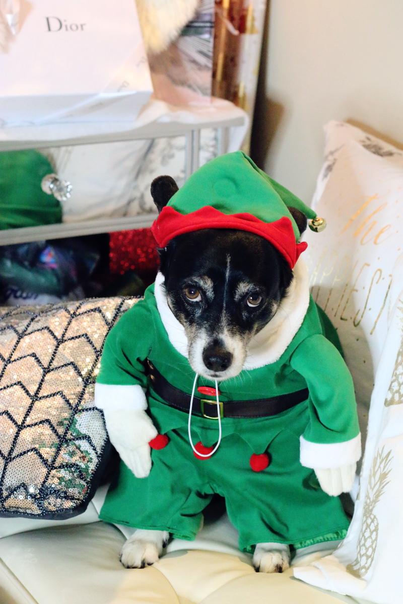 louis-dog-elf-3