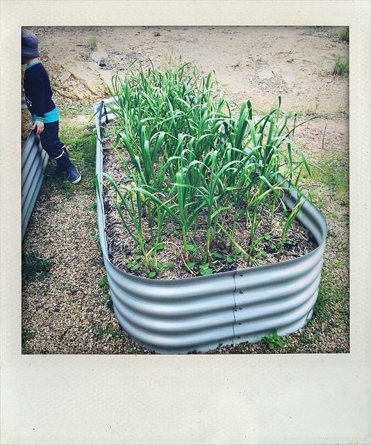 Veg Garden Spring 16