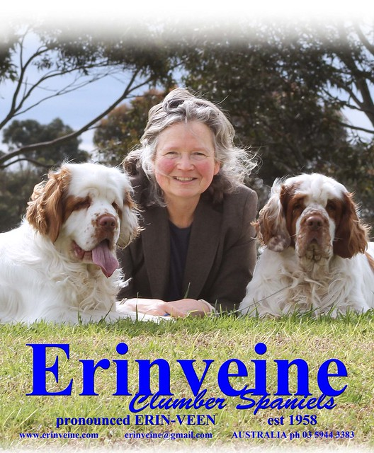 Welcome to the Erinveine Clumbers website