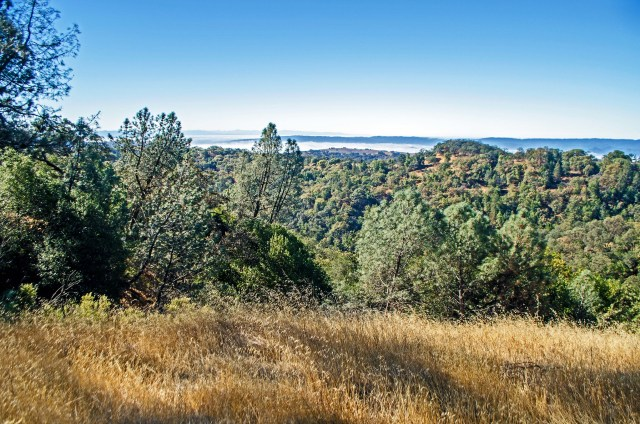 A grassy meadow overlooking the Santa Clara Valley from the Live Oak Trail.