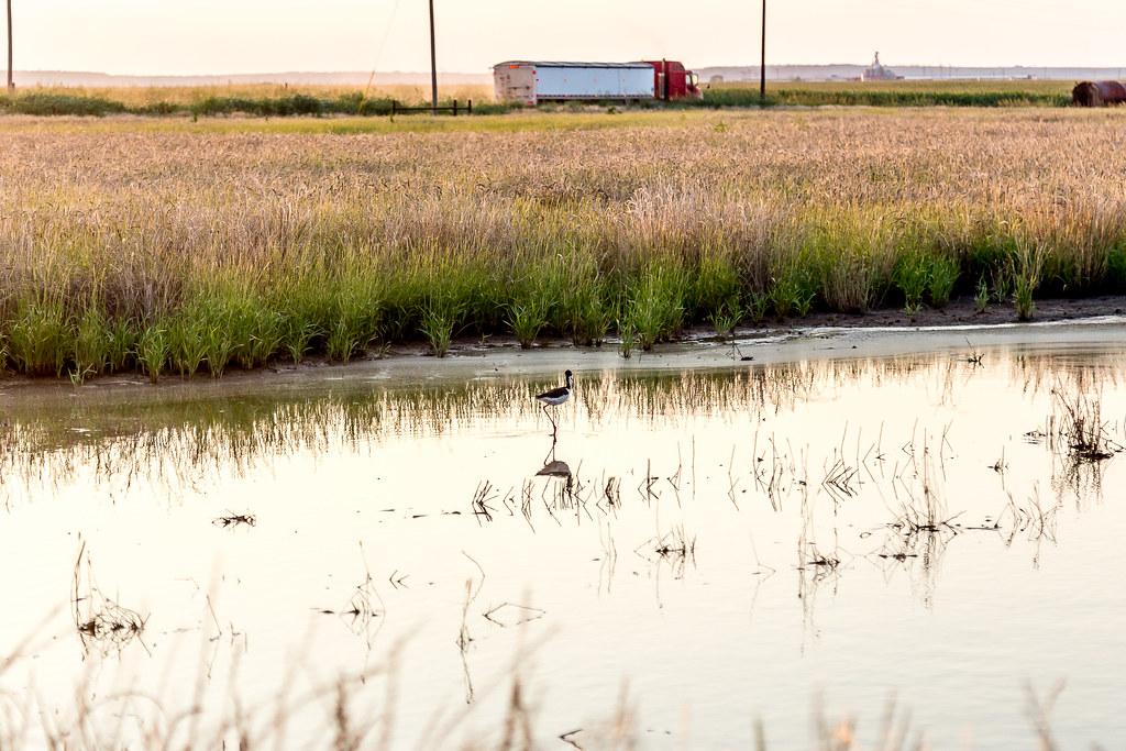 6-9-16 HPH Texas Harvest Photos - Laura-7