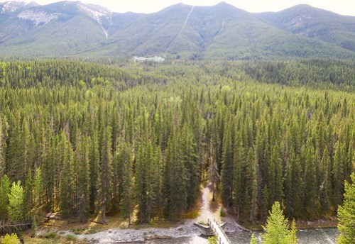 Things to do in Banff: Spray River Loop