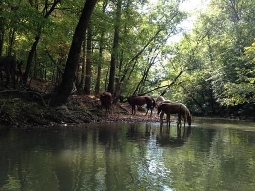Kayaking Big Wills Creek, Attalla AL