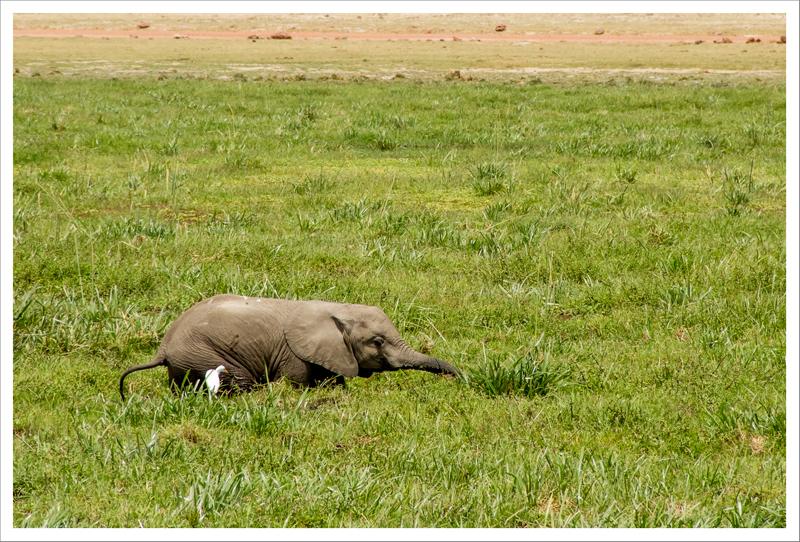 Amboseli-122