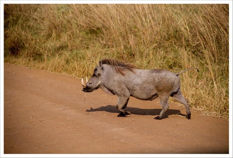 MasaiMara-58