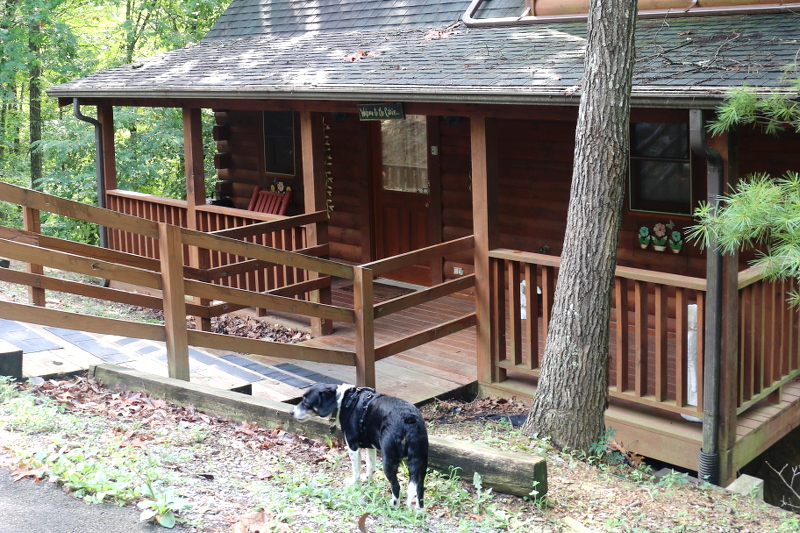 front-log-cabin-louis-dog-3