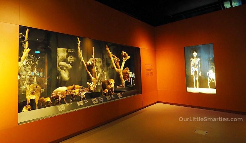 Lee Kong Chian Museum 3