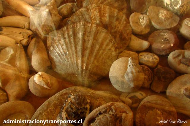 Fósiles | Entrada Muelle de las Almas