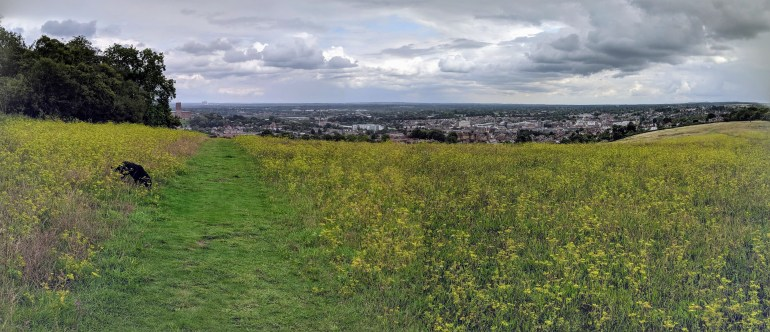 Guildford from the mount. Some may call them weeds, I call it a beautiful meadow