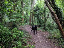 'Our' trail - green and muddy