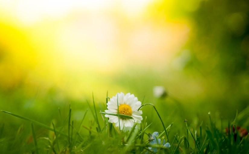 Sunlight, flower, Sweden