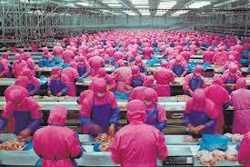 usine nuggets de poulet