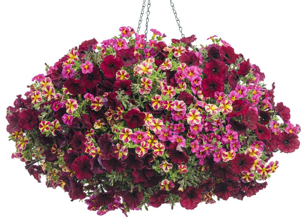 Mini Hanging Basket