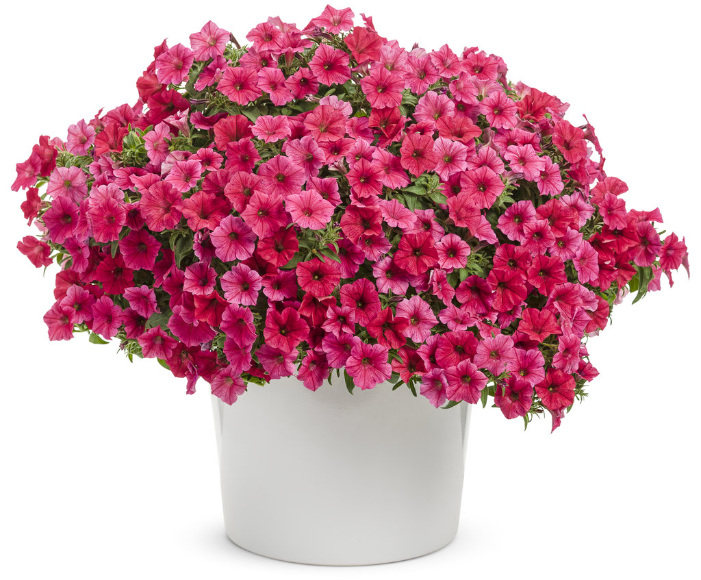 Wall Hanging Baskets Plants