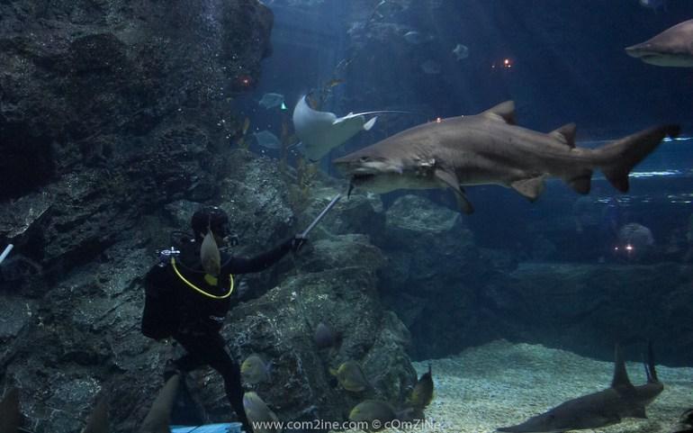 Bangkok Sea Life Ocean World