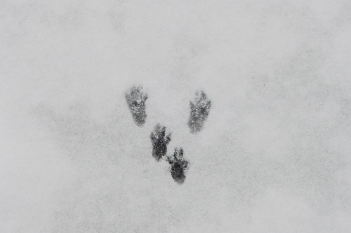 2017 Greenville Snow (9 of 18)