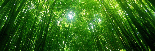 Does bamboo flooring increase home values