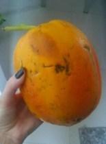 Papaya Outside