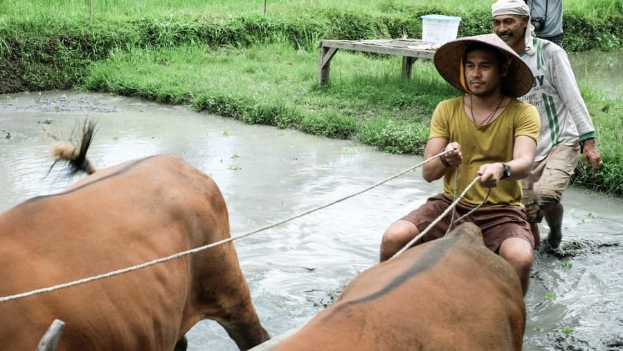 buffalo ride at rice paddies (12 of 25)