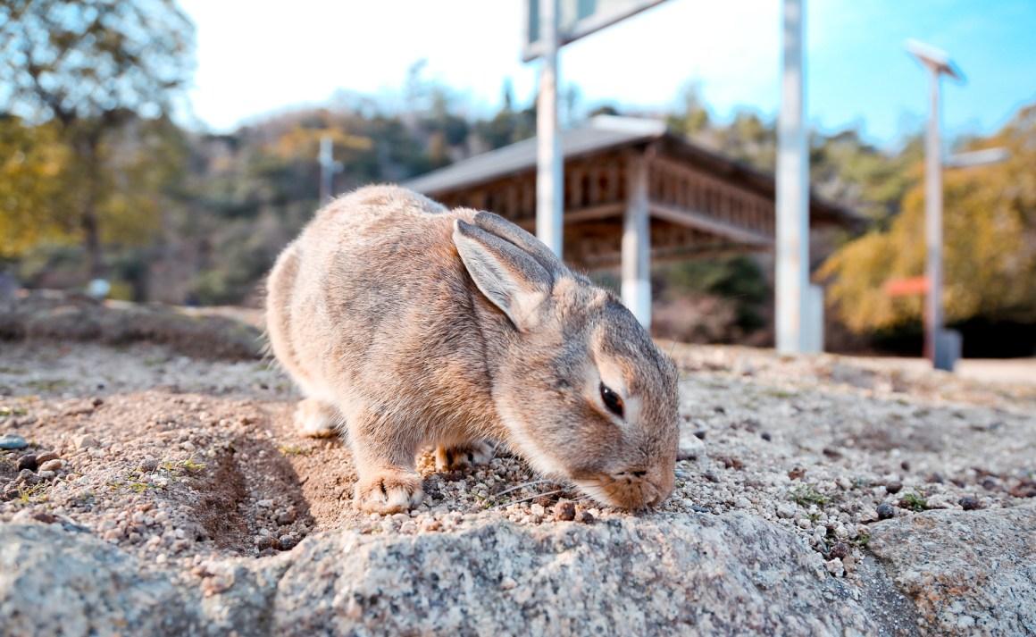 大久野島兔子島 Hiroshima 206