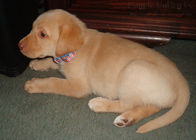 Rusalka Puppy Picture