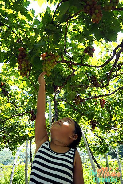 gapuz grape farm