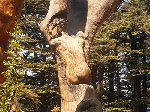 Jesus Tree Carving at Cedars Of God