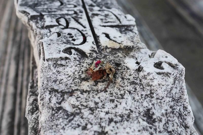 City Monument - A Perfect Tomb, Mehrauli