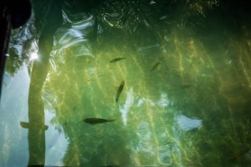 Lake Jocassee-033