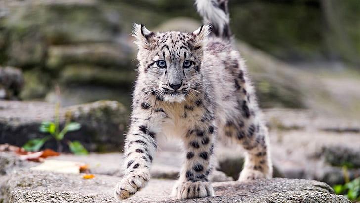 HD wallpaper: Cats, Snow Leopard, Cub | Wallpaper Flare