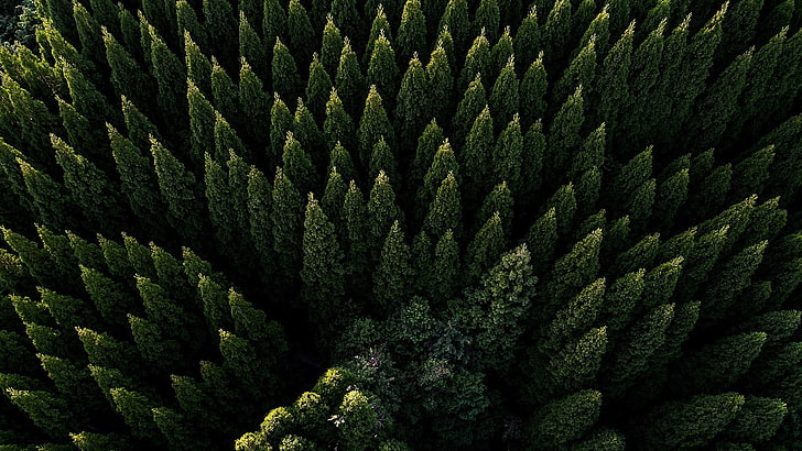 HD wallpaper: evergreen forest, drone photography, aerial view, tree,  aerial photography | Wallpaper Flare