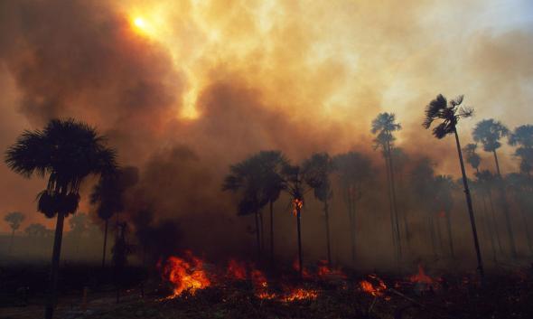 https://i2.wp.com/c402277.ssl.cf1.rackcdn.com/photos/939/images/story_full_width/forests-threats-fireHI_51727.jpg?resize=590%2C353&ssl=1