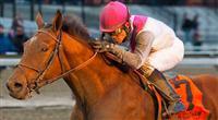 Vyjack horse