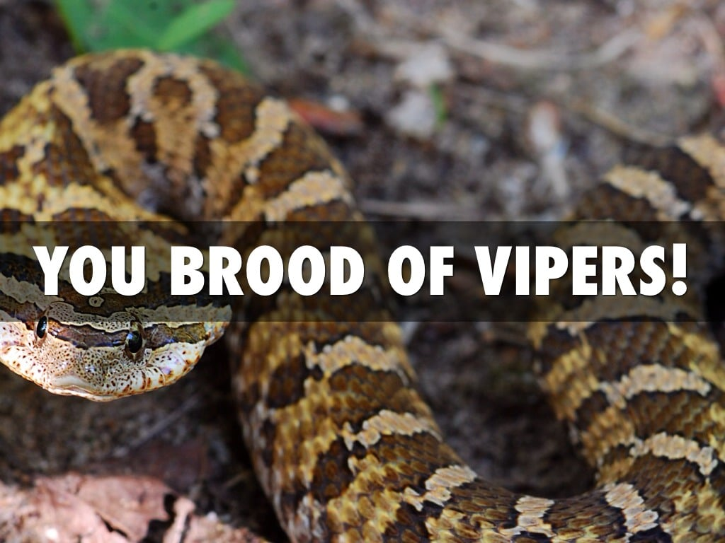 Image result for brood of vipers