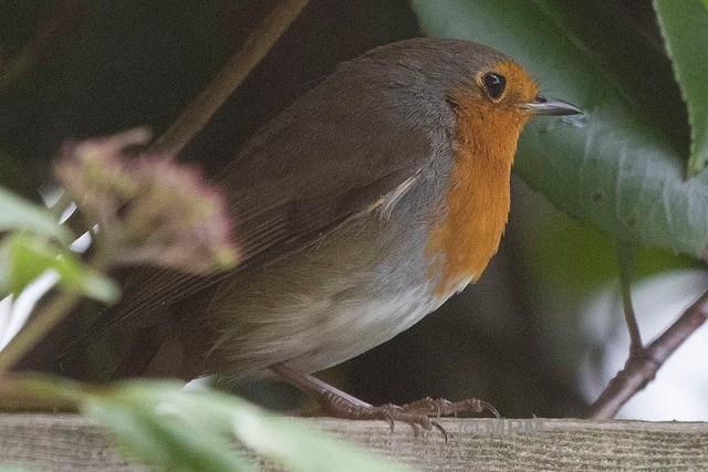 Robin 23-09-2015