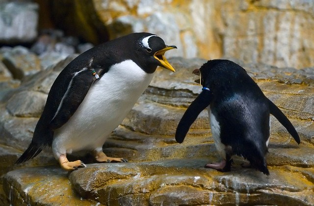 Arguing Penguins