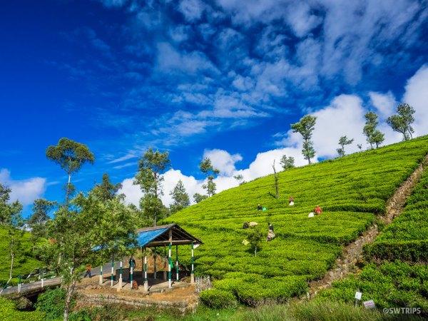 Dambetenne Tea Plantation (4) - Haputale, Sri Lanka.jpg