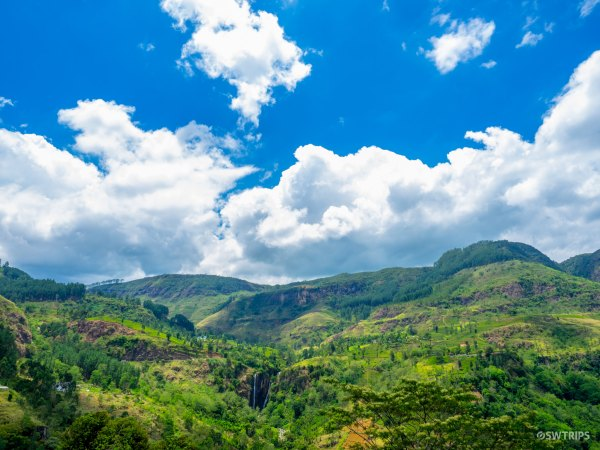 The View from Tea Bush - Ramboda, Sri Lanka.jpg